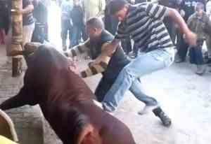 """Massale dierenmishandeling in Gaza voor """"slachtfeest"""""""