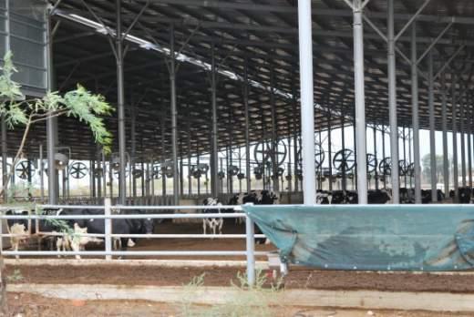 Melkveehouderij in Israel