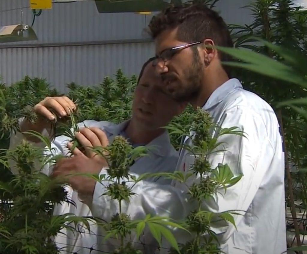Naar eigen zeggen is de plantage het grootste laboratorium voor het bewerken van plantengenen in Israël en een van de grootste ter wereld.